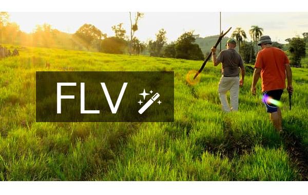 Editor vídeo FLV